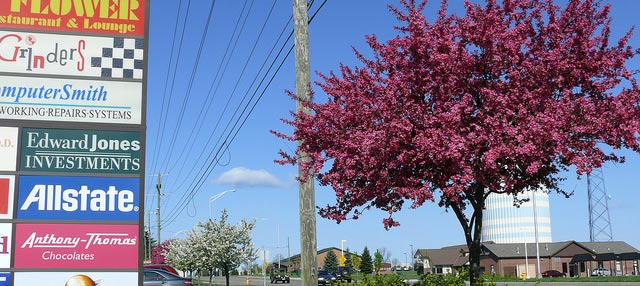 Spring Tree Blooming Outside Polaris Mall in Lewis Center, Ohio